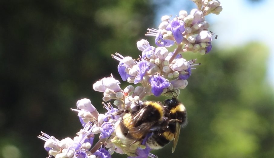 For a while now Friends of the Earth have been campaigning to save our bees. Bumble bees aren't doing so well at the moment and they've called on the Government to draw up a Bee Action Plan.