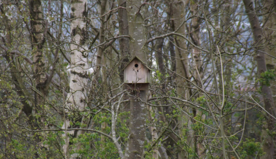 Did you know that the 12-21st February is National Nest Box Week? The event is organised by The BTO (British Trust for Ornithology) who are an independent charitable research institute. They aim to collect data on the status of UK birds. The aim of the week is to encourage people to put up nest boxes in their local area.